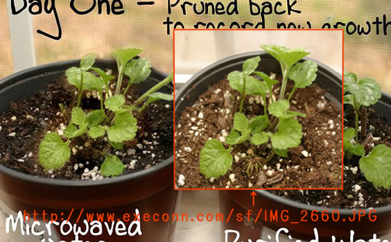 1 day's green and original photo